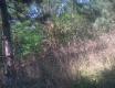 Prokopské údolí - video č. 68663