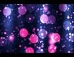 Před webkou - video č. 73434