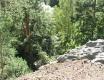 hrátky v lese - video č. 79862
