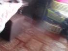 Ranní honička